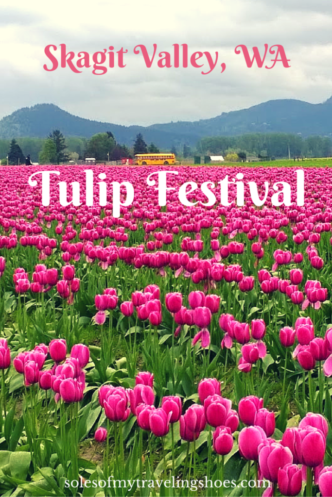 Day Trip from Seattle: Skagit Valley Tulip Festival & Bow, Washington